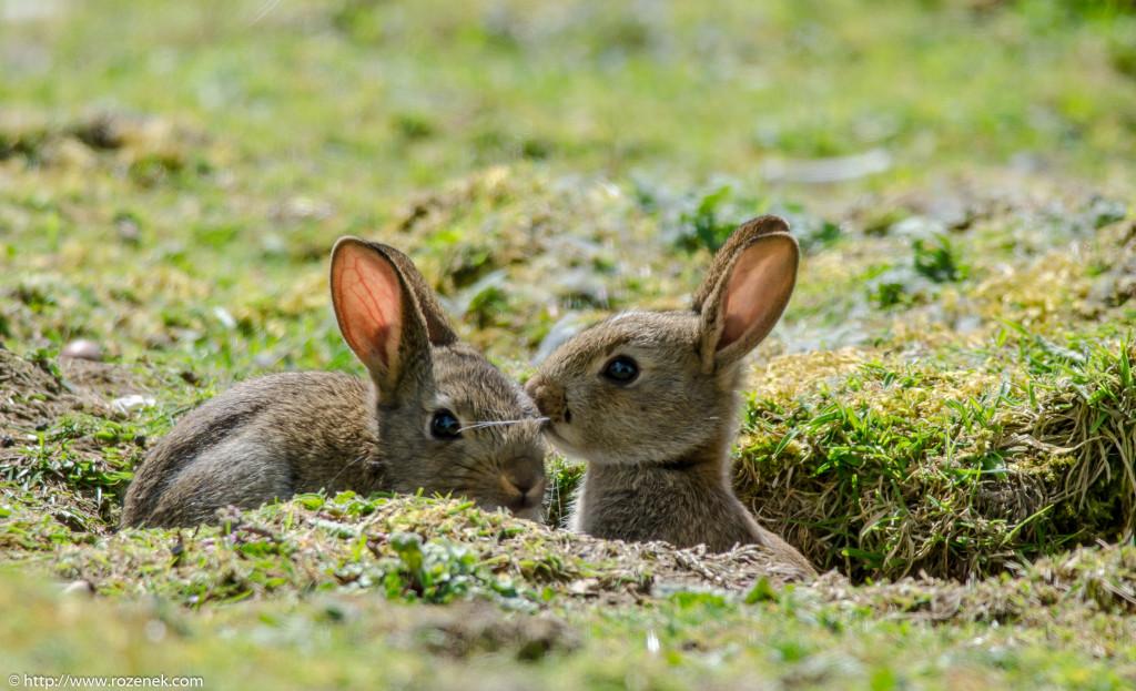 2914.04.27 - Rabbits - 11