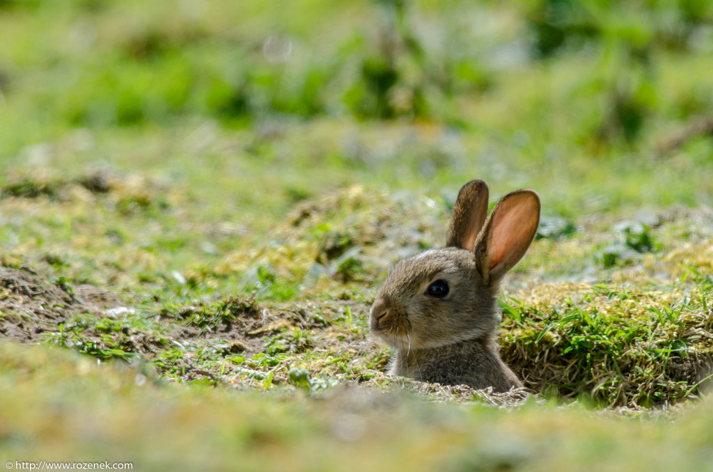 2914.04.27 - Rabbits - 12