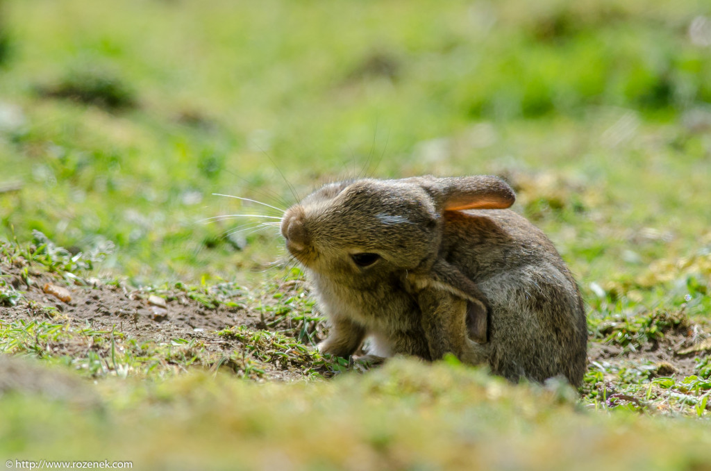 2914.04.27 - Rabbits - 13