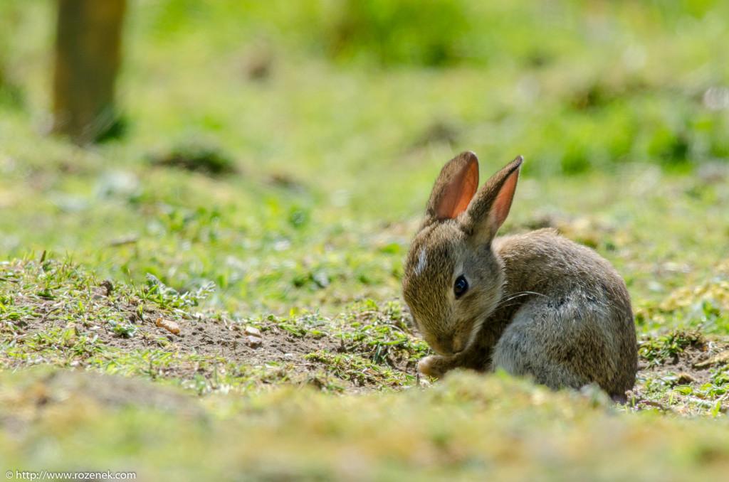 2914.04.27 - Rabbits - 14