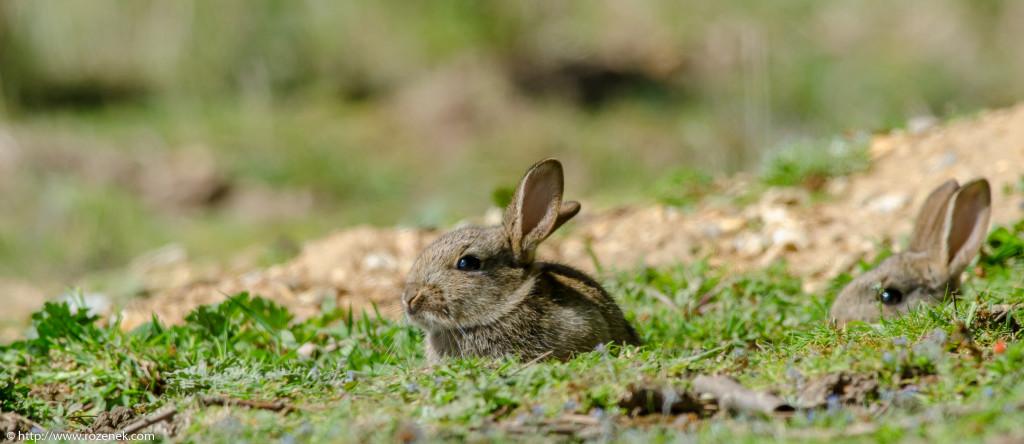 2914.04.27 - Rabbits - 15