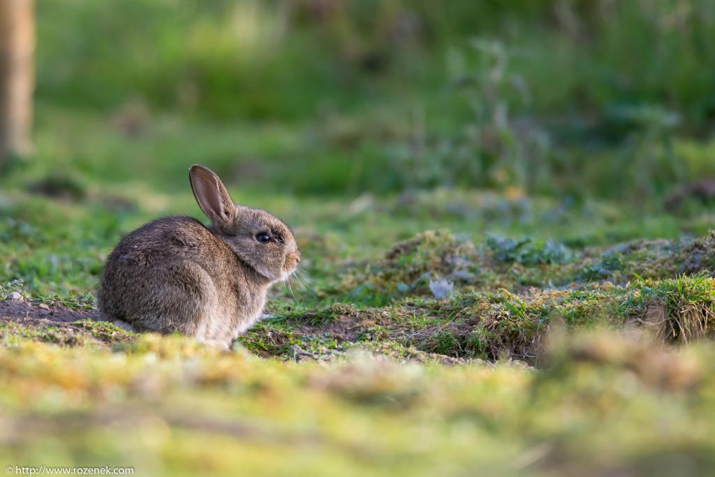 2914.04.27 - Rabbits - 16