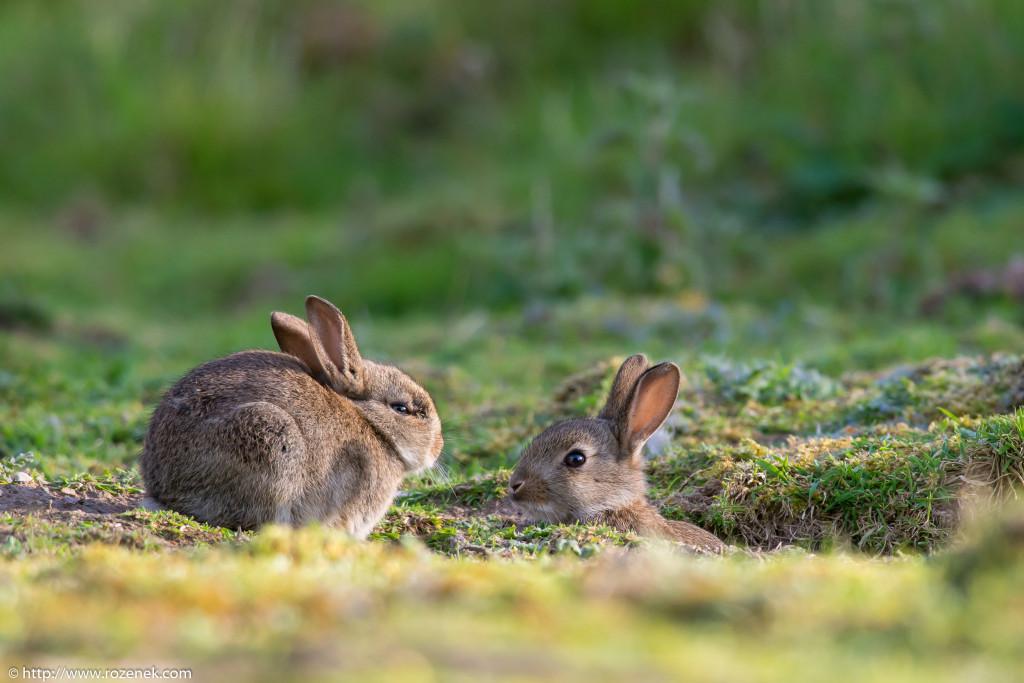 2914.04.27 - Rabbits - 17