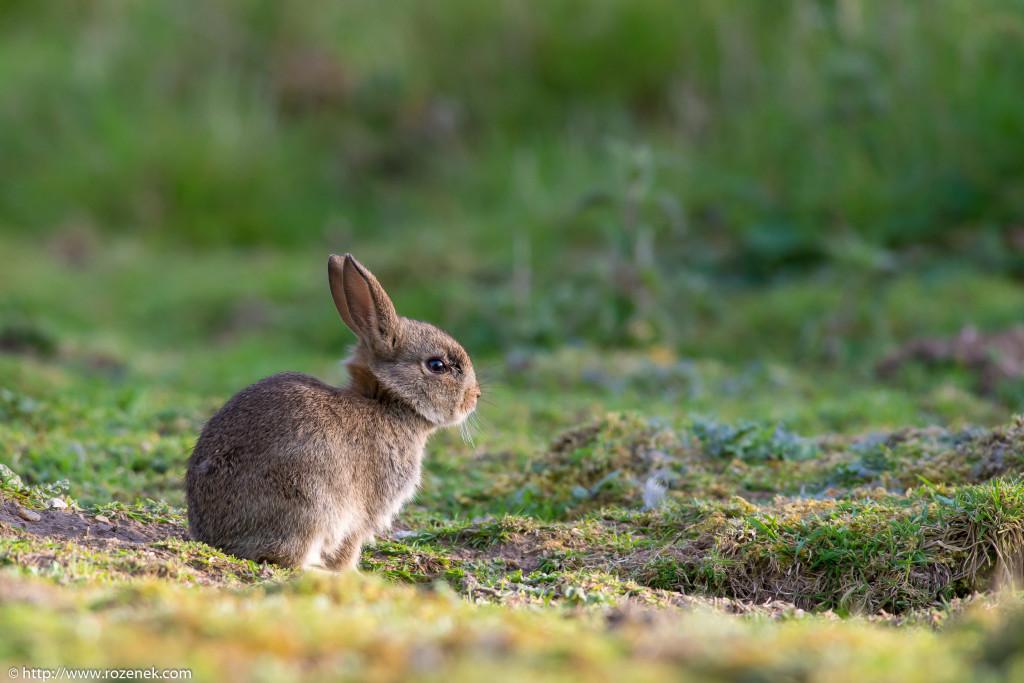 2914.04.27 - Rabbits - 18
