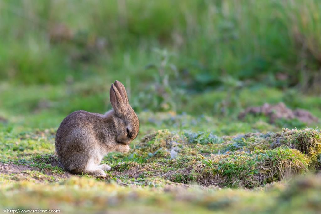 2914.04.27 - Rabbits - 19
