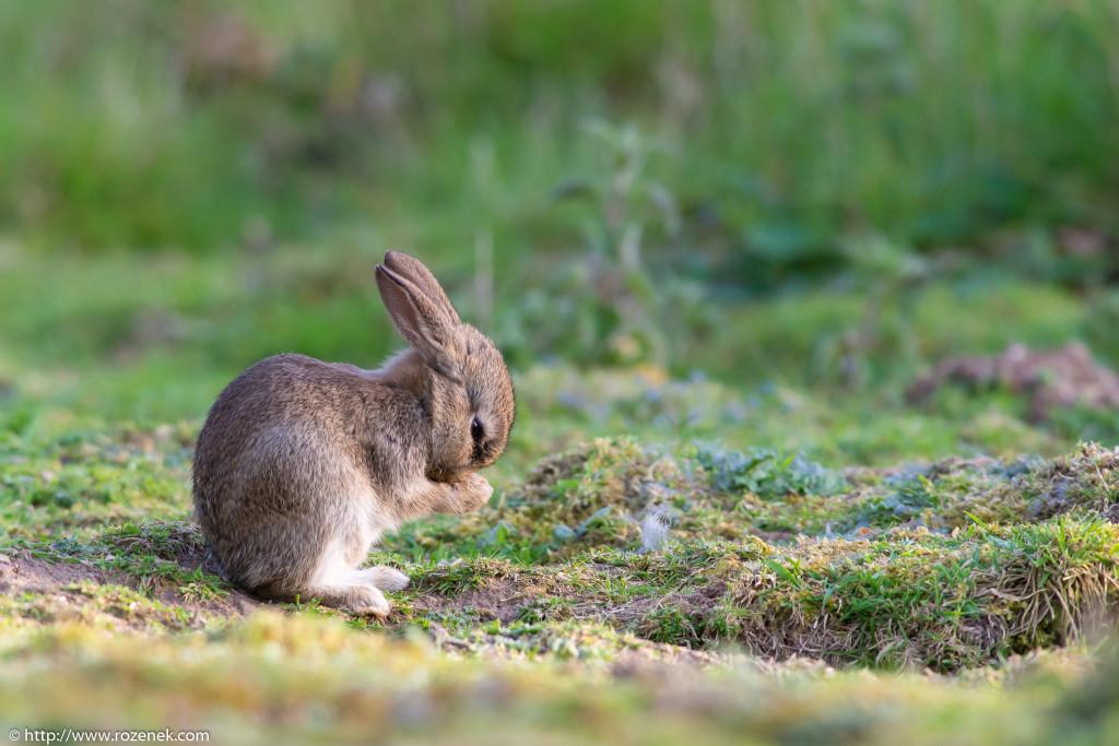 2914.04.27 - Rabbits - 20