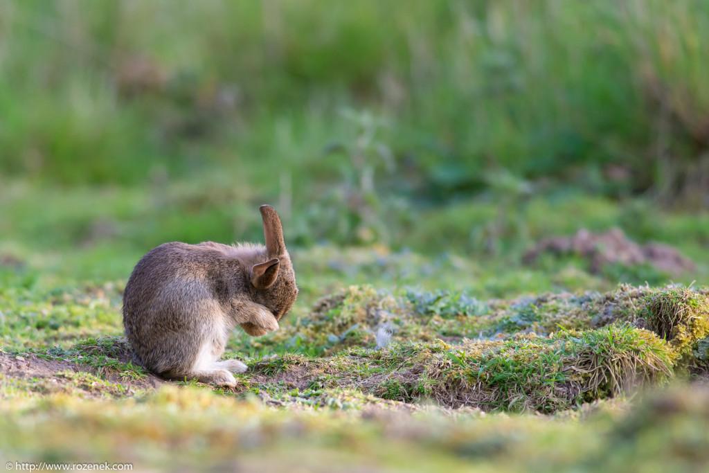 2914.04.27 - Rabbits - 21