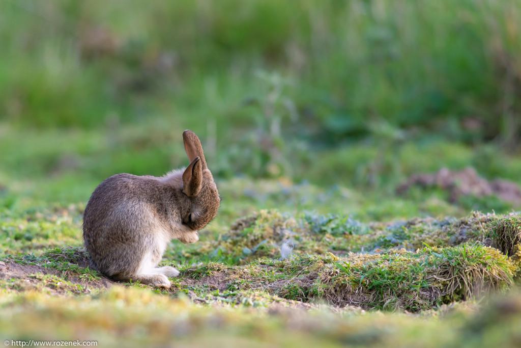 2914.04.27 - Rabbits - 22