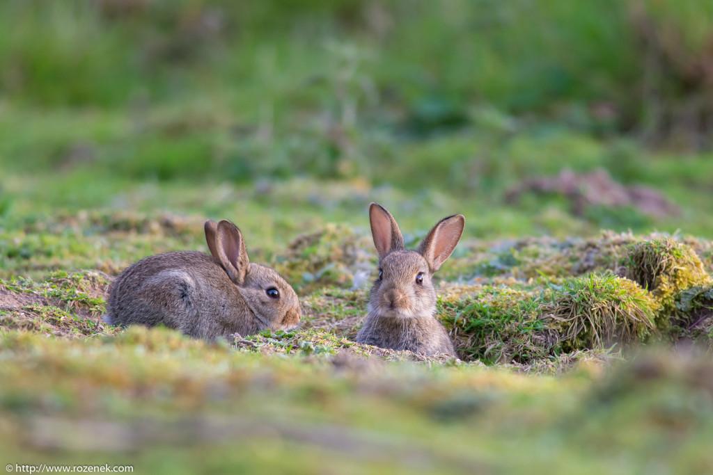 2914.04.27 - Rabbits - 23