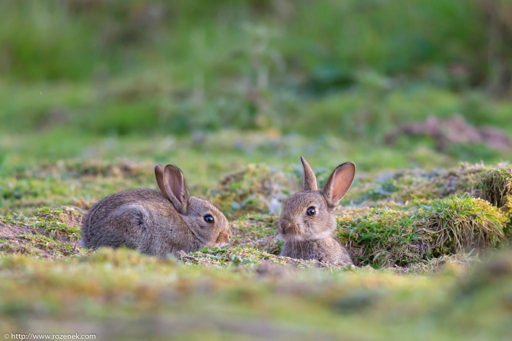 2914.04.27 - Rabbits - 24