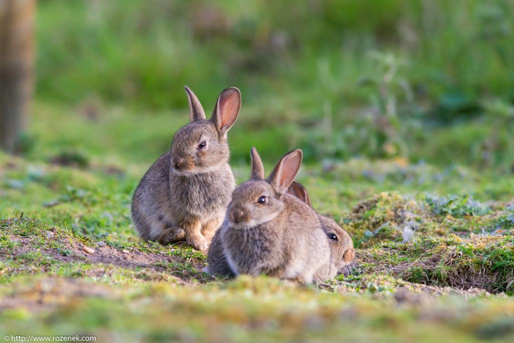 2914.04.27 - Rabbits - 25