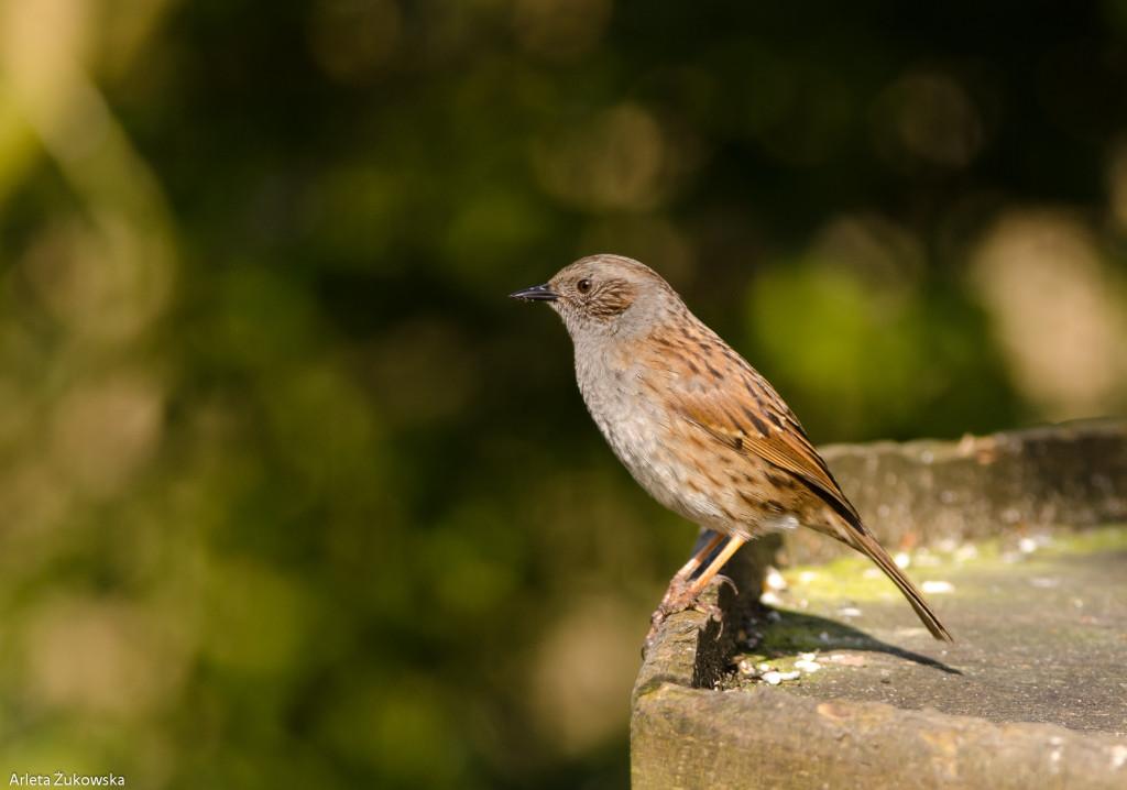 Birds-12.03.14-12