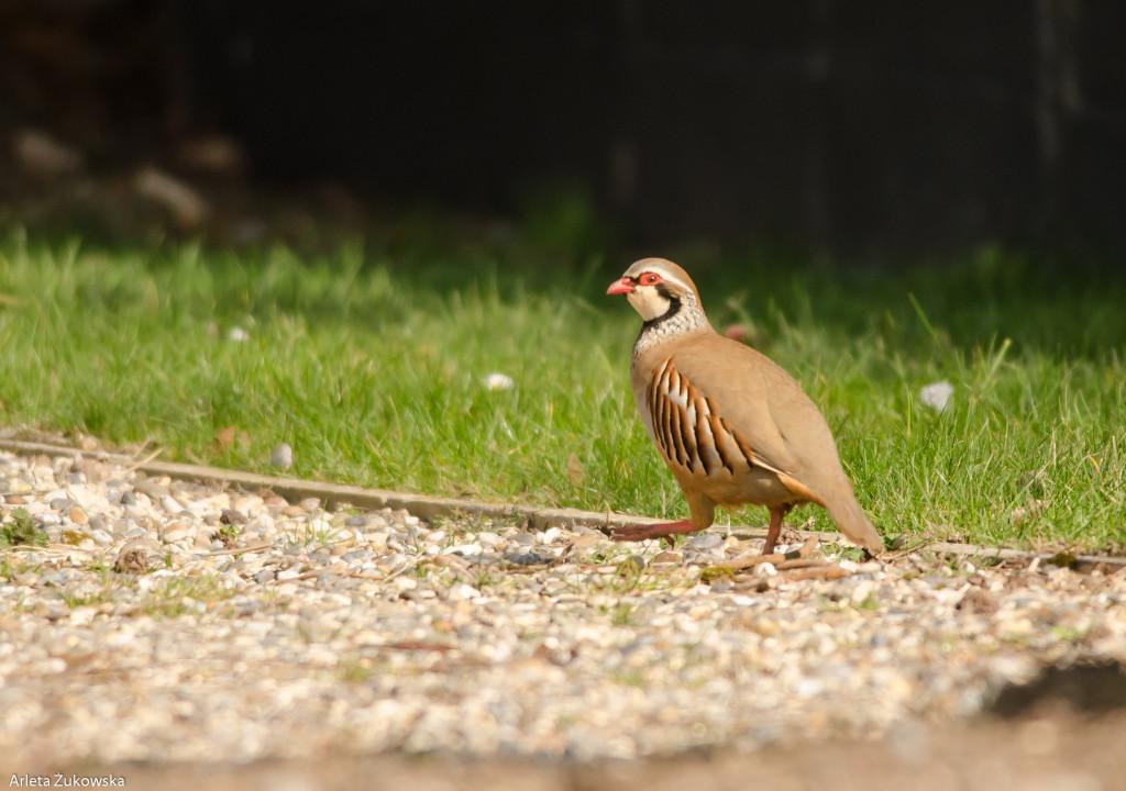 Birds-12.03.14-16