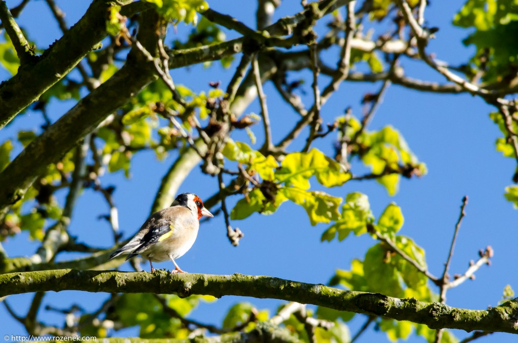 2014.05.13 - Birds - 02