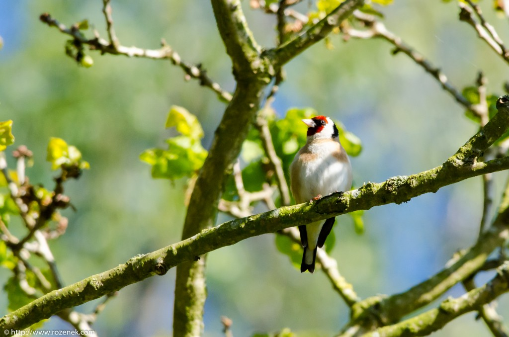 2014.05.13 - Birds - 04