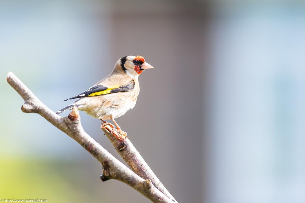 2015.04.11 - Birds - 02